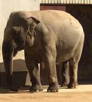 縞板-王子動物園④