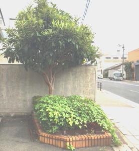 縞板-花壇②