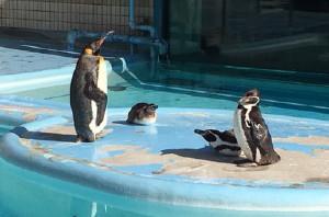 縞板-王子動物園①