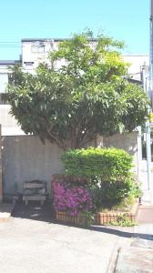縞板-花壇①