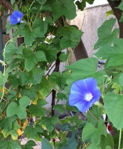縞板-花壇③